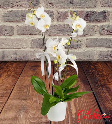 3 Dallı İthal Beyaz Orkide