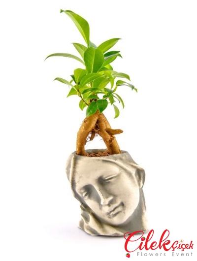 Artemis Bonsai