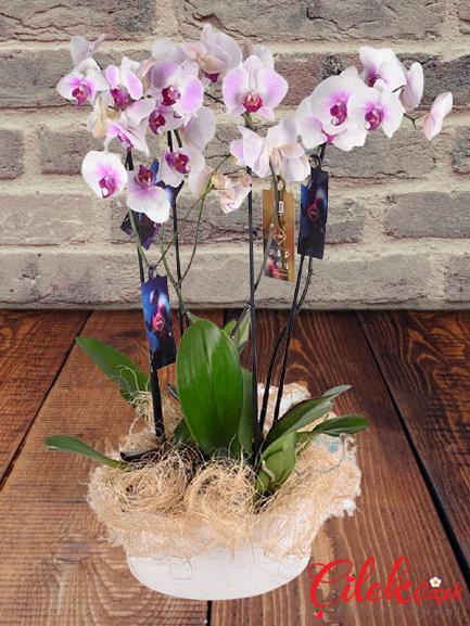Orkide Dünyası