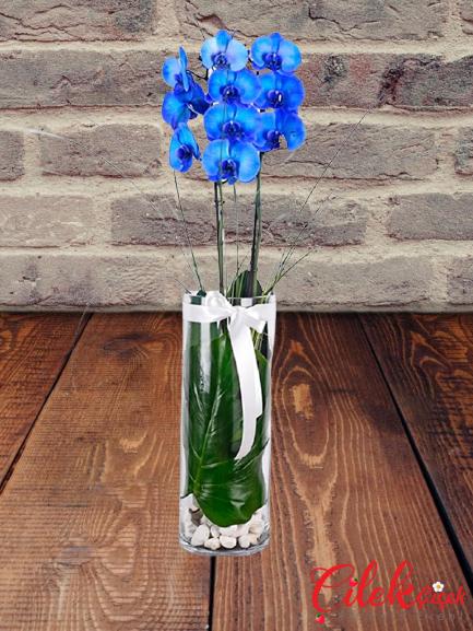 Cam İçi Mavi Orkide
