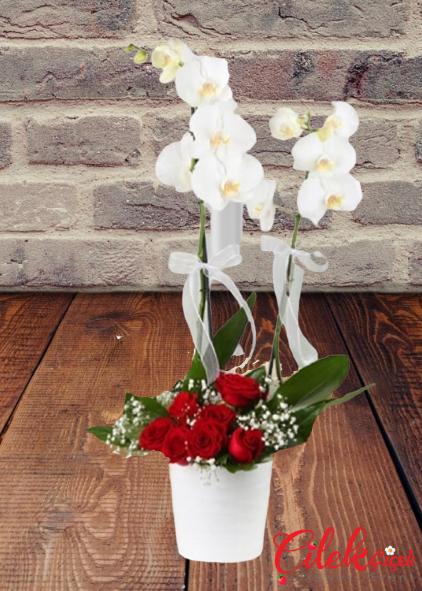 Beyaz Orkide ve Kırmızı Güller